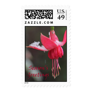 Fuscia Flower in the Snow Postage Stamps
