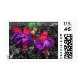 Fuscia Flower Postage stamp