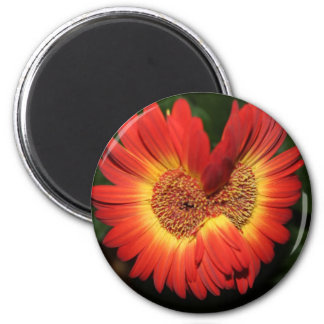 Fused Flower 2 Inch Round Magnet