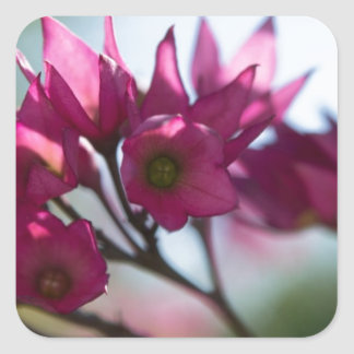 Fushcia Flower Square Sticker