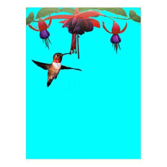 Fushia and Hummingbird Postcard