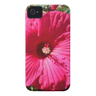Fushia Flower iPhone 4 Covers