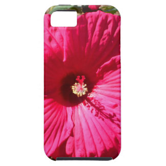 Fushia Flower iPhone 5 Cases