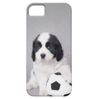 Futbolista de Landseer iPhone 5 Cobertura