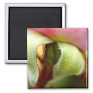 Fuzzy 2 Inch Square Magnet