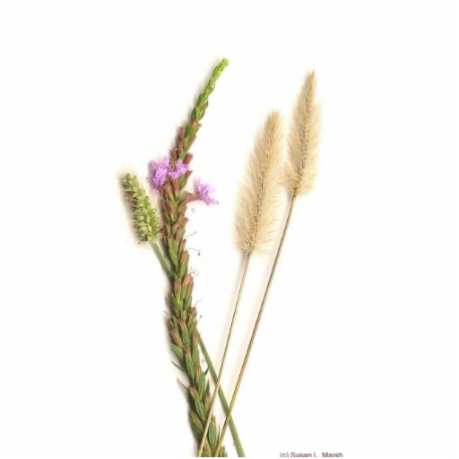 Fuzzy and purple flowers with green stems standing photo sculpture