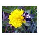 Fuzzy Bee Postcard