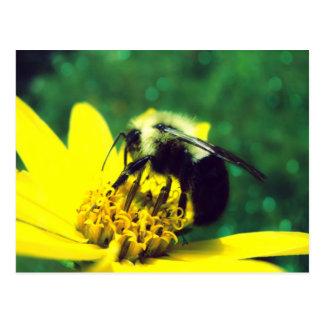 Fuzzy Bumblebee Photo Postcard
