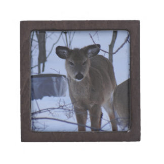 Fuzzy Deer Gift Box
