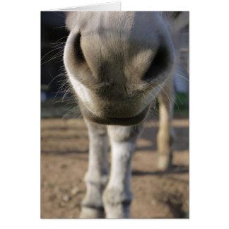 Fuzzy Donkey nose Blank card