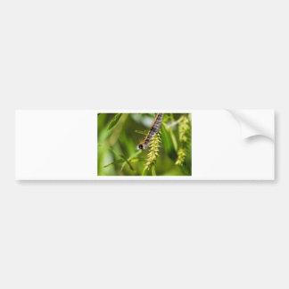 Fuzzy Eastern Tent Worm Caterpillar Bumper Sticker