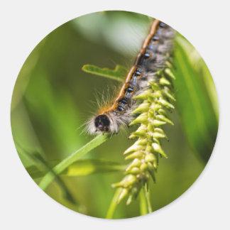 Fuzzy Eastern Tent Worm Caterpillar Classic Round Sticker