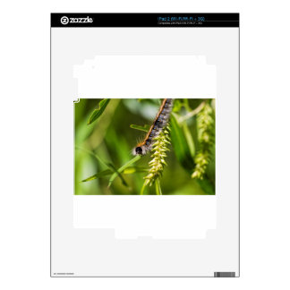 Fuzzy Eastern Tent Worm Caterpillar Decal For iPad 2