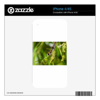 Fuzzy Eastern Tent Worm Caterpillar Decals For iPhone 4S