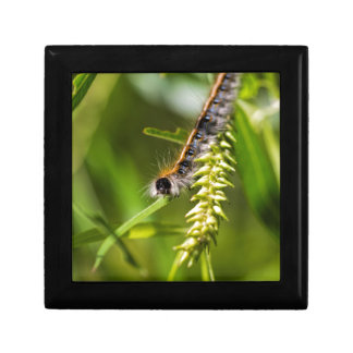 Fuzzy Eastern Tent Worm Caterpillar Gift Box