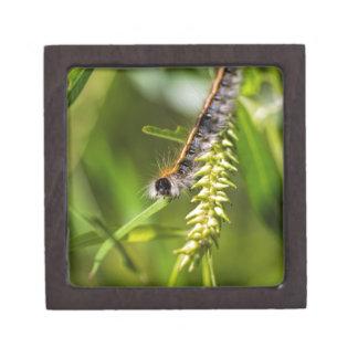Fuzzy Eastern Tent Worm Caterpillar Jewelry Box