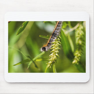 Fuzzy Eastern Tent Worm Caterpillar Mouse Pad