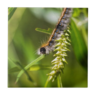 Fuzzy Eastern Tent Worm Caterpillar Tile