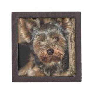 Fuzzy Face Yorkshire Terrier Keepsake Box