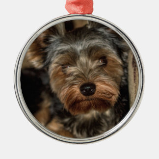 Fuzzy Face Yorkshire Terrier Metal Ornament
