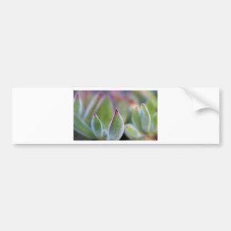 Fuzzy Green Succulent Leaves Macro Bumper Sticker