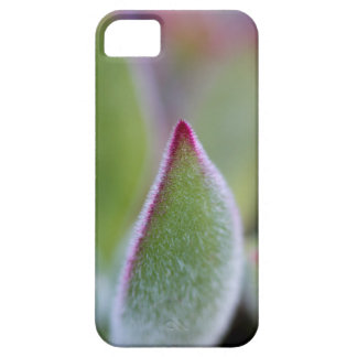 Fuzzy Green Succulent Leaves Macro iPhone SE/5/5s Case