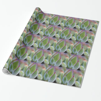 Fuzzy Green Succulent Leaves Macro Wrapping Paper