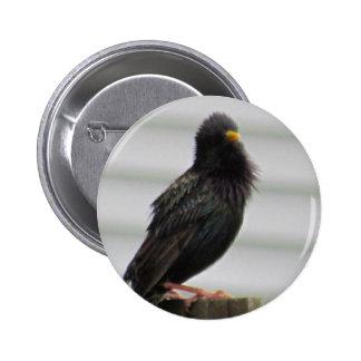 Fuzzy Headed Bird Pinback Buttons