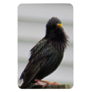 Fuzzy Headed Bird Flexible Magnet