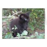 Fuzzy kitten note card
