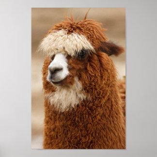 Fuzzy Llama Print