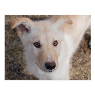Fuzzy Puppy Postcard