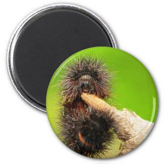 Fuzzy Wuzzy...... 2 Inch Round Magnet