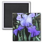 FX- imán azul del iris