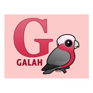 G is for Galah Postcard