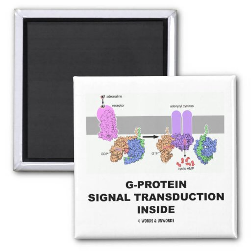 G-Protein Signal Transduction Inside Magnet