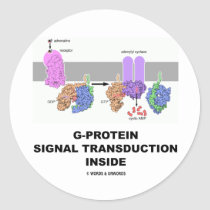 G-Protein Signal Transduction Inside Round Stickers