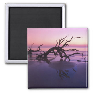 GA Jekyll Island, Tree graveyard on  beach at 2 Inch Square Magnet
