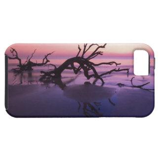 GA Jekyll Island, Tree graveyard on  beach at iPhone 5 Case