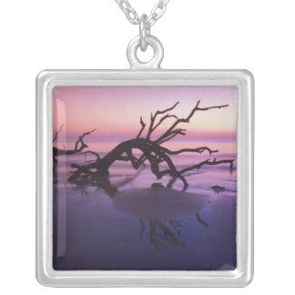GA Jekyll Island, Tree graveyard on  beach at Necklaces