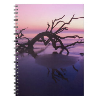 GA Jekyll Island, Tree graveyard on  beach at Notebook