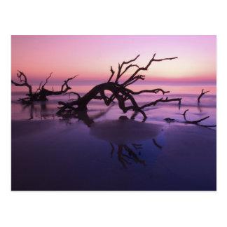 GA Jekyll Island, Tree graveyard on  beach at Postcard