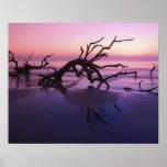 GA Jekyll Island, Tree graveyard on  beach at Posters