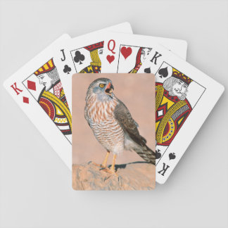 Gabar Goshawk (Melierax Gabar) Juvenile Playing Cards