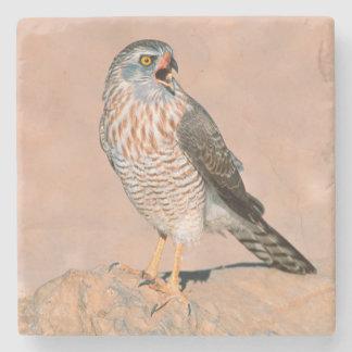 Gabar Goshawk (Melierax Gabar) Juvenile Stone Coaster