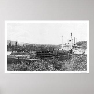 Gabarra el río Yukón 1914 del ganado Posters