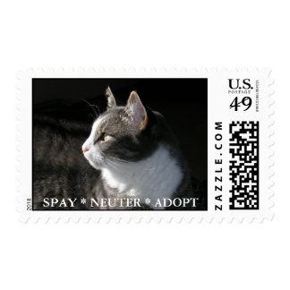 Gabe postage stamp:  SPAY * NEUTER * ADOPT