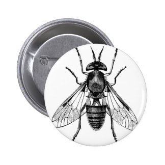 gadfly vintage illustration pins