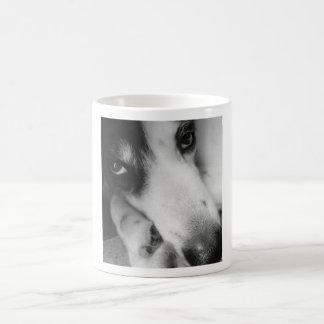 Gado taza