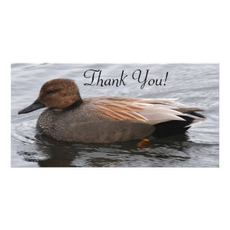 Gadwall Duck and Many Beautiful Shades of Brown Card